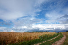 Landscape with road and field Royalty Free Stock Photography