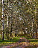 Landscape with road in forest Royalty Free Stock Photo