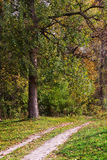 Landscape with road in forest Royalty Free Stock Images