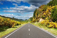 Landscape with road and forest Stock Photo