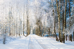 Landscape Road In Winter Royalty Free Stock Photography