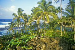 Landscape of road to Hana, Maui, HI Royalty Free Stock Images