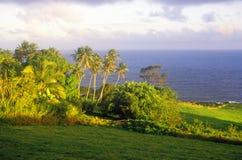 Landscape of road to Hana, Maui, HI Royalty Free Stock Photos