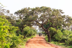 Landscape with road in Yala National Park Stock Image
