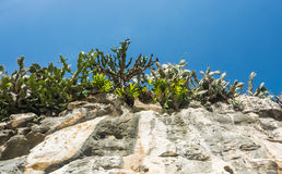 Landscape of rocky mountain and tree in front of blue sky.  Royalty Free Stock Photo