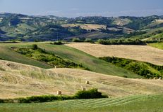 Landscape in Romagna at summer: fields Royalty Free Stock Image