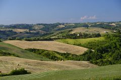 Landscape in Romagna at summer: fields Stock Image