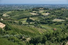 Landscape in Romagna at summer: vineyards Stock Photo