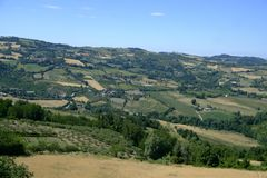 Landscape in Romagna at summer: vineyards Royalty Free Stock Photography