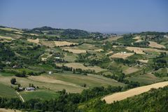 Landscape in Romagna at summer: vineyards Royalty Free Stock Photo