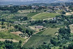 Landscape in Romagna at summer: vineyards Royalty Free Stock Images