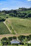 Landscape in Romagna at summer: vineyards Stock Images