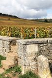 Landscape with Romanee Conti vineyards in Burgundy Royalty Free Stock Photo
