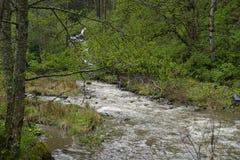 Landscape of Romania Carpathian Stock Photos