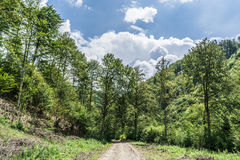 Landscape in Romania Stock Images