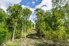 Landscape in Romania. In summer 2016 romania Stock Photography