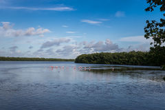 Landscape with Roseate Spoonbills, J.N. Ding Darling Nationa Stock Photos