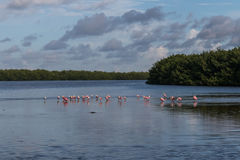Landscape with Roseate Spoonbills, J.N. Ding Darling Nationa Royalty Free Stock Images