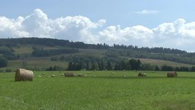 Landscape, round bales of hay in a meadow stock video footage