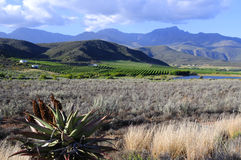 Landscape of route 62 with Aloe in foreground - South Africa Royalty Free Stock Images