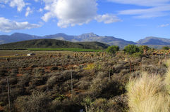Landscape of route 62 with wine fields in background - South Africa Royalty Free Stock Photo