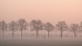 Landscape with a row of trees and a grass field with fence on a misty morning Stock Image