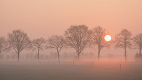 Landscape with a row of trees and a rising sun and a grass field with fence on a misty morning Royalty Free Stock Photos