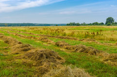 Landscape with rows of mown hay on a water-meadow Stock Photos