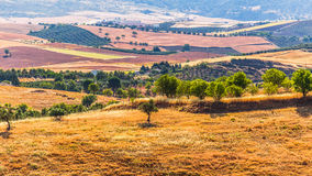 Landscape in rural,  Andalusia, Spain. Stock Image