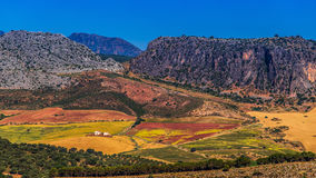 Landscape in rural,  Andalusia, Spain. Royalty Free Stock Images