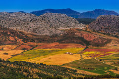 Landscape in rural,  Andalusia, Spain. Stock Photos