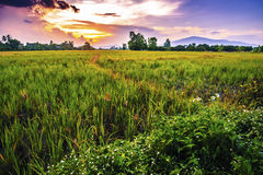 Landscape of rural atmosphere at sunset.  Stock Photo