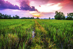 Landscape of rural atmosphere at sunset.  Royalty Free Stock Photos