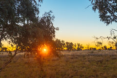Landscape of rural Australia, gum leaves and a sunset Stock Photography
