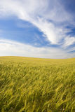 Landscape with rural field and beautiful sky Stock Photography