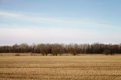 Landscape of rural field in early spring with forest behind Royalty Free Stock Photography