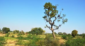 Landscape of rural india in Hariyana. stock photography