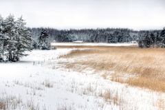 Landscape of rural meadow and snowy forest Stock Image
