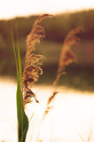 Landscape - Rushes Stock Images