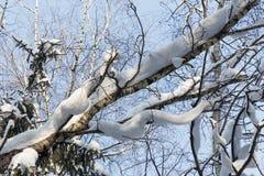 landscape russian village winter δέντρα χιονιού sberia Νοεμβρίου hakasia Στοκ εικόνα με δικαίωμα ελεύθερης χρήσης