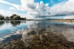 Landscape of Rutland Water Park, England. Swan in Rutland Water Park in England royalty free stock photos