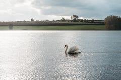Landscape of Rutland Water Park, England. Swan in Rutland Water Park in England stock images
