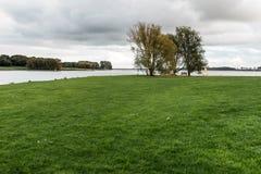 Landscape of Rutland Water Park, England. Swan in Rutland Water Park in England royalty free stock images