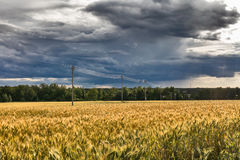 Landscape with rye ripe field and electricity transmission line Royalty Free Stock Image