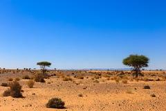 Landscape in the Sahara desert Stock Photography