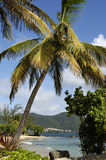 Landscape of Sainte Luce in Martinique Royalty Free Stock Image