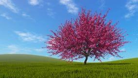 Landscape with sakura cherry tree in full blossom vector illustration