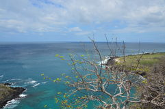 Landscape at San Cristobal Island - Galapagos. A landscape view of  the Pacific Ocean from the Frigatebird Hill at San Cristobal Island, Galapagos Stock Images