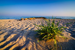 Landscape sand beach Stock Photography