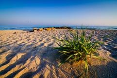 Landscape sand beach stock photography